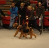 Breed parade at Dogs4all 2011