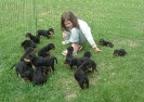 Ada with Mias 15 puppies!